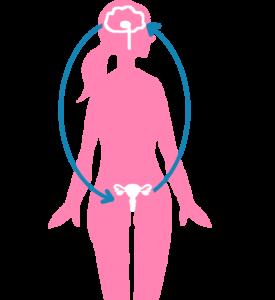 生殖器系のコントロール